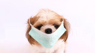 アレルギー対策におすすめするドックフードランキング