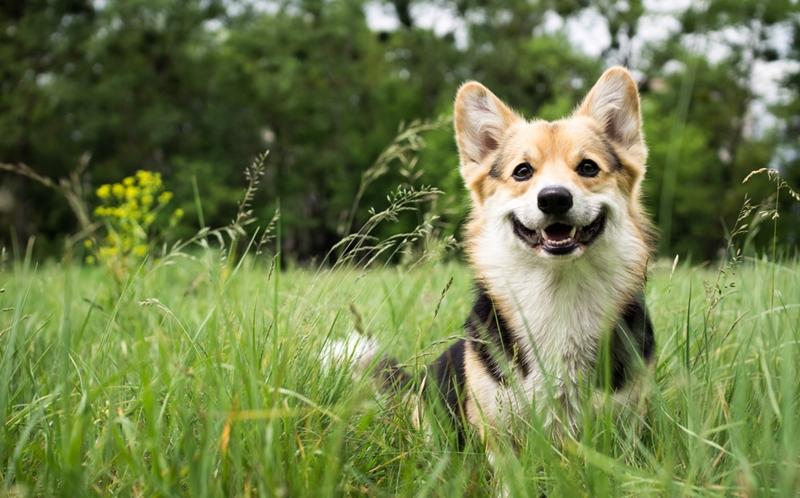 成犬におすすめドックフードランキング