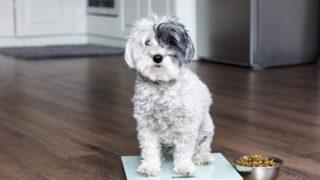 痩せ気味の犬におすすめのドックフードランキング