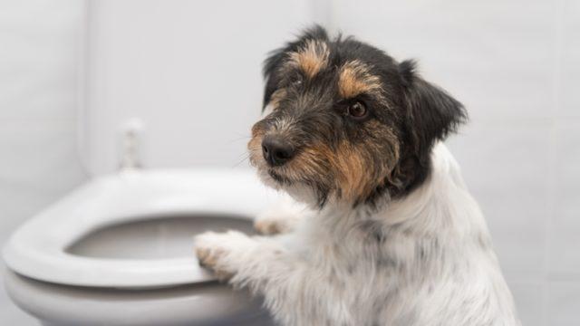下痢気味の犬におすすめするドックフードランキング