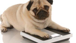 肥満気味の犬におすすめドックフードランキング