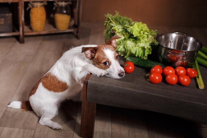 老犬用ドックフードは動物性タンパク質が豊富であること!