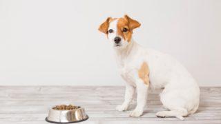 犬がドックフードを食べない?