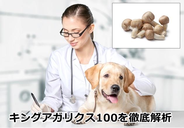 キングアガリクス100ペット用の口コミ評判を徹底解析!